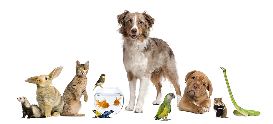bigstock Group Of Pets Together In Fron 8258872